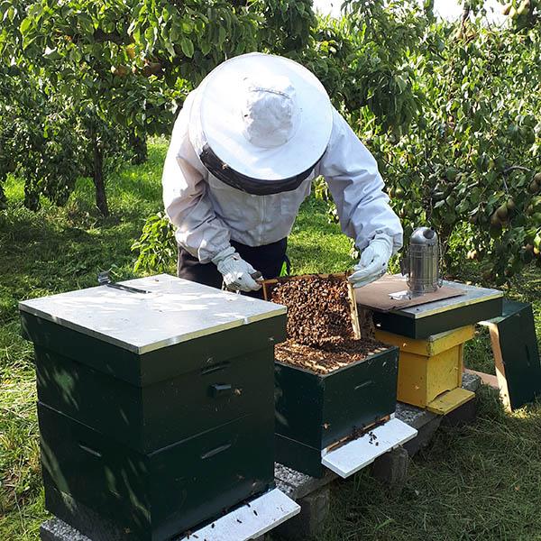 Van Ledden Ongediertebestrijding - Bijennest laten verwijderen - Bijen bestrijden (15)