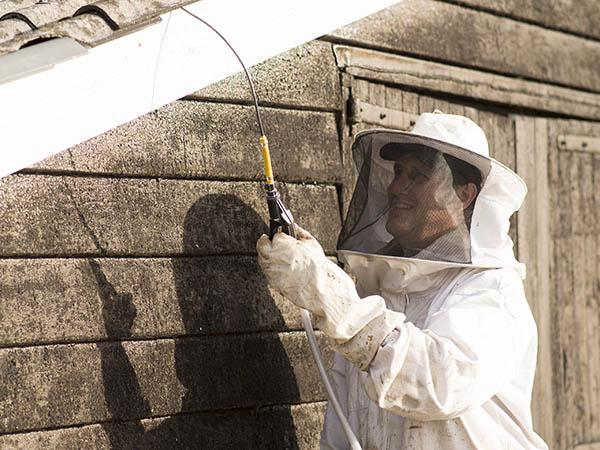 Van Ledden Ongediertebestrijding - Overlast van wespen door wespennest - 2