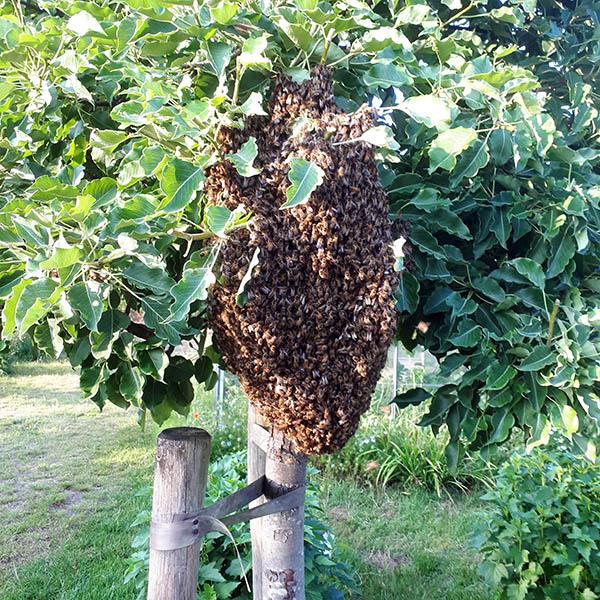 Van Ledden Ongediertebestrijding - Overlast van wespen door wespennest - 9