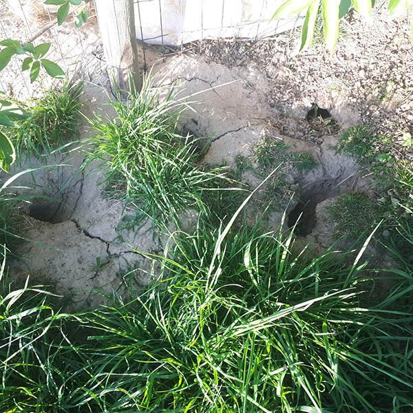 Van Ledden Ongediertebestrijding - Ratten bestrijden last van ratten (12)