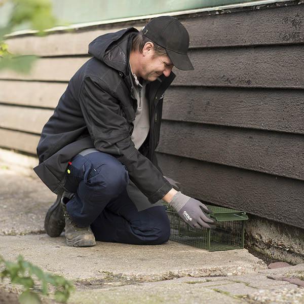 Van Ledden Ongediertebestrijding - Ratten bestrijden last van ratten (2)