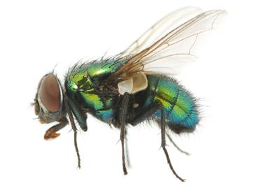 vliegen-van-ledden-ongediertebestrijding-kevers-muizen-spinnen-ratten-maurik-gelderland