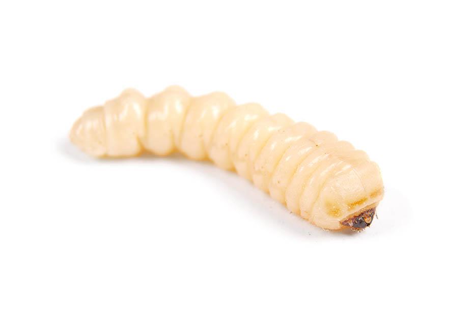 Van-Ledden-Ongediertebestrijding-Houtworm-bestrijden-Houtworm-in-meubels-of-hout-8.jpg