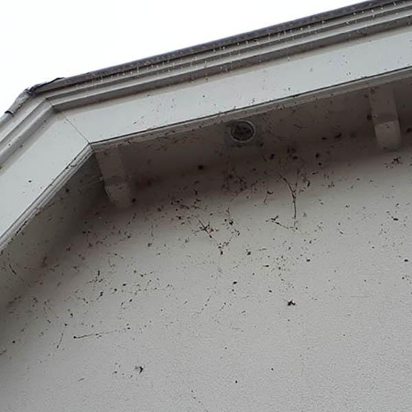 Van Ledden Ongediertebestrijding - Spinnen bestrijden - Spinnenoverlast in huis (3)