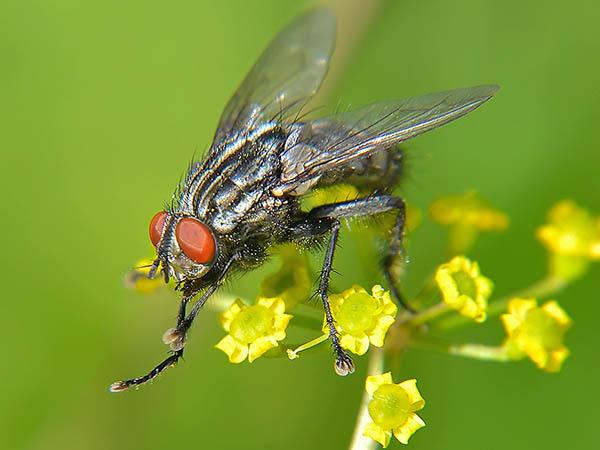 Van Ledden Ongediertebestrijding - Last van vliegen - Vliegen bestrijden (11)