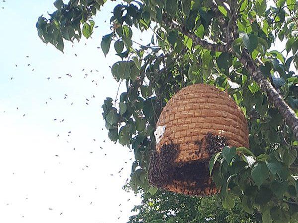 Van Ledden Ongediertebestrijding - Bijennest laten verwijderen - Bijen bestrijden (24)