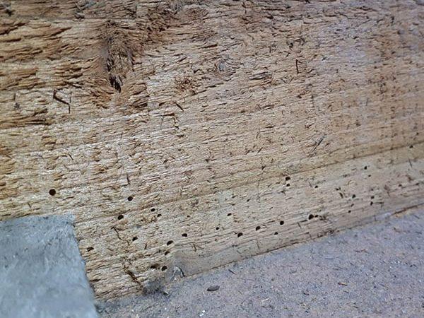 Van Ledden Ongediertebestrijding - Houtworm bestrijden - Houtworm in meubels of hout (5)